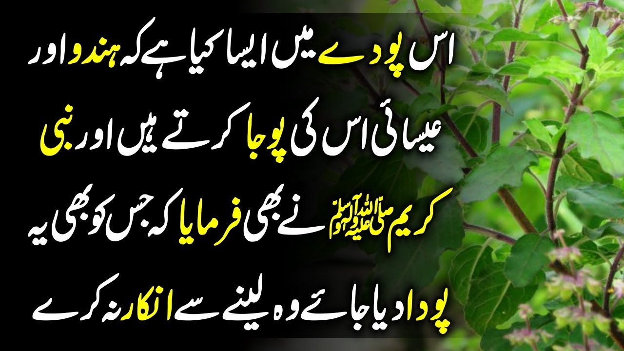 Which Are The 7 Most Sacred Plants In The World Urdu Hindi Facts About  Plants || Urdu Lab