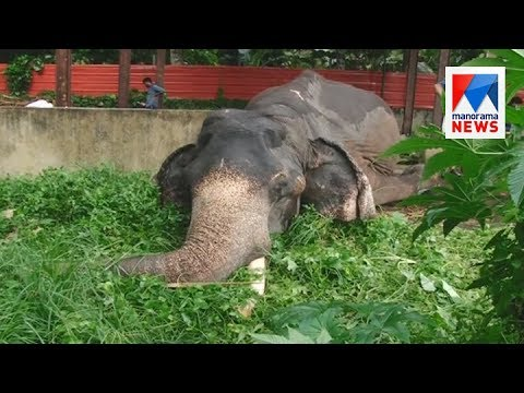 Aranmula temple elephant Parthan passed away  | Manorama News