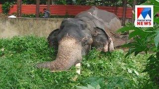 Aranmula temple elephant Parthan passed away  | Manorama News