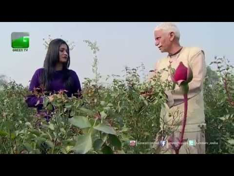 Cash Crops (Nakadi Fasalein): Rose Farming - Full Episode