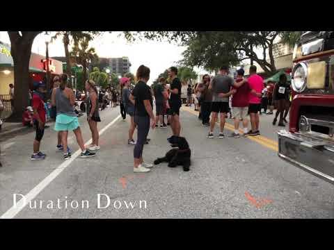 1 Year Old Standard Schnauzer 'Stella'   Palm Bay Dog Trainers   Brevard Dog Trainers  
