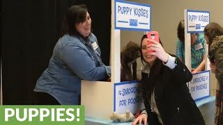 Puppies set up kissing booth to raise money
