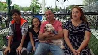 Miami-Dade Animal Services Pet Adoption & Protection Center 1 Year Anniversary