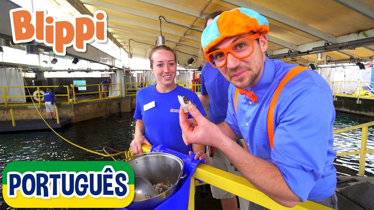 Blippi Visita um Aquário da Flórida) | Vídeos Educativos para Crianças | As Aventuras de Blippi