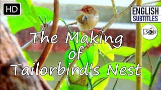 || The Making of Tailorbird