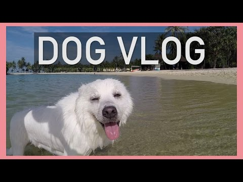 Funny Dogs at the Beach!