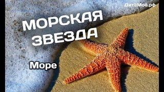 Морская звезда. Энциклопедия для детей про животных. Море