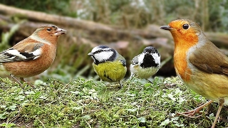 Birds in Slow Motion : With Beautiful Bird Sounds
