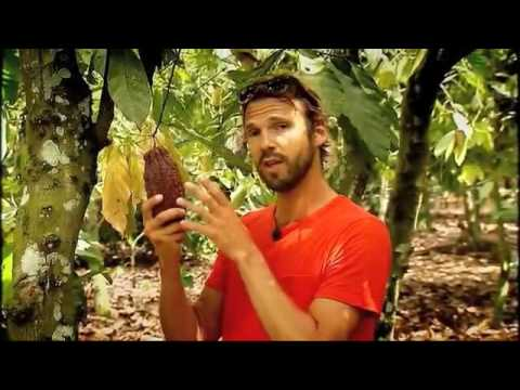 1 Karrewiet - Fair Trade au Ghana - La Plantation