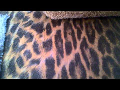 видео: обзор моего домика для Торалей Страйп