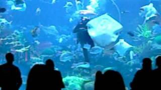 Silverton Aquarium in Las Vegas, Nevada
