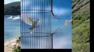 Download Mahmoud Migri - Houriya MP3 song and Music Video