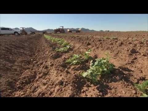 Colorado River Series: Agriculture