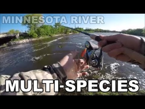 MINNESOTA RIVER FISHING 2019 | MULTI-SPECIES
