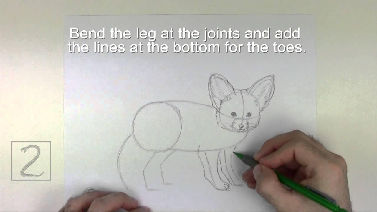 Fennec Fox Drawing Tutorial