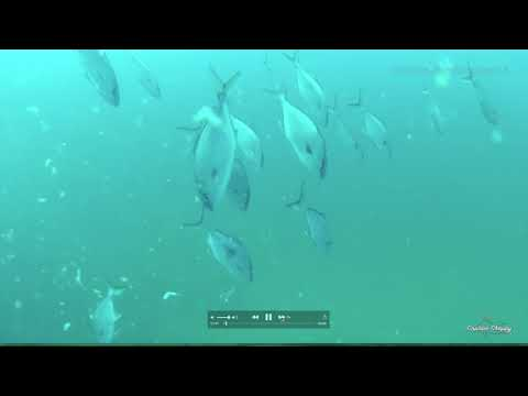 Gulf Of Mexico Pipeline Fishing - What Is It And What Lives There?