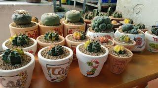 Hướng dẫn cách trồng xương rồng tại nhà   How to make cactus garden