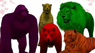 Learn Colors with Wild Animals Finger Family Song | Colors Ani…