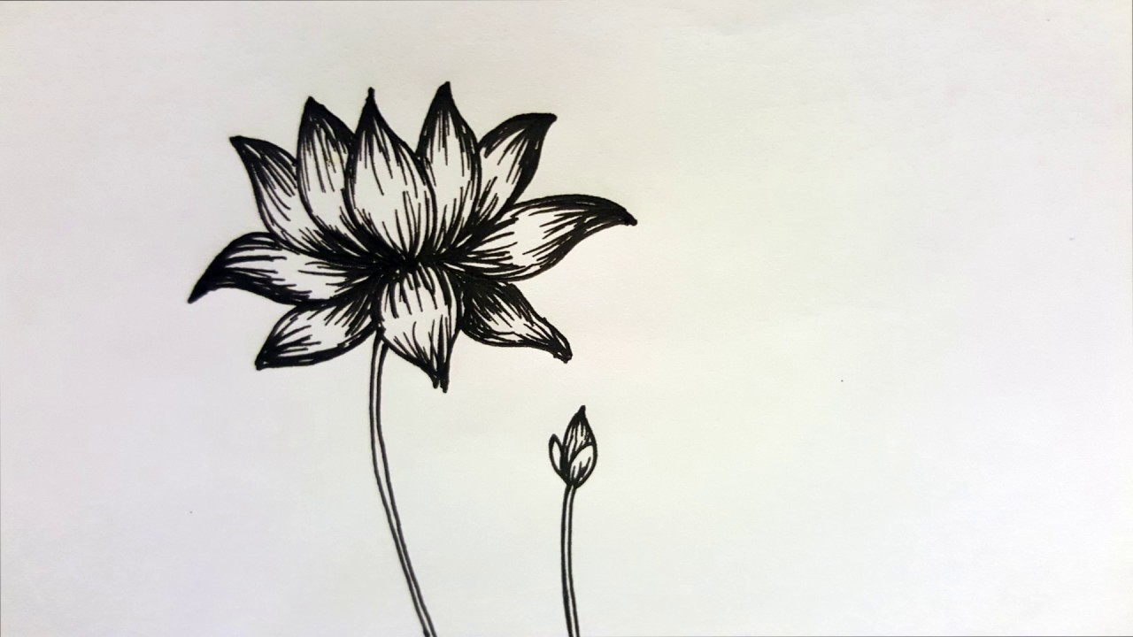 How to draw a lotus with a black ball pen easy drawing