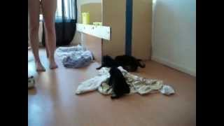 Duitse herder pups 4  - bijna 3 weken