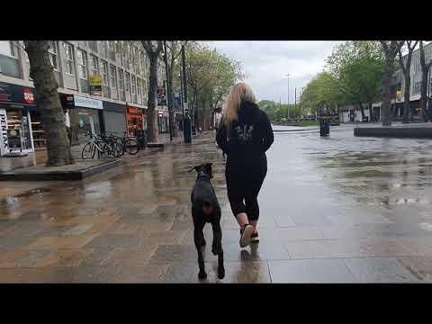 Year Old Doberman | Zeus | Dog Training in London