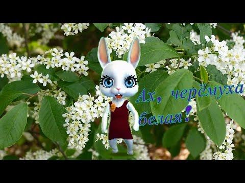 Zoobe Зайка Белая черемуха - Как поздравить с Днем Рождения