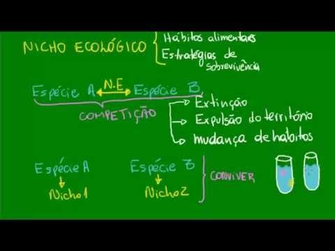 Habitat e nicho ecológico - Ecologia - Biologia