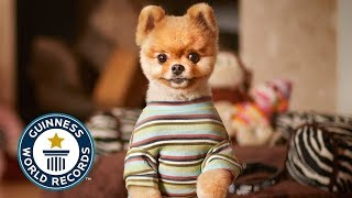 10 ANIMALS WITH GUINNESS WORLD RECORDS