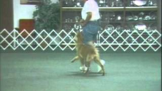 Competitive Obedience With Annemarie Silverton- Problem Solving In Heeling- Focused Attention