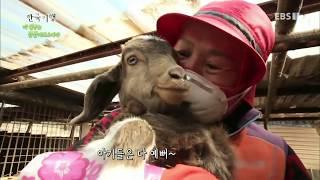 한국기행 - Korea travel_내 친구는 동물이로소이다 3부 봄의 왈츠_#002