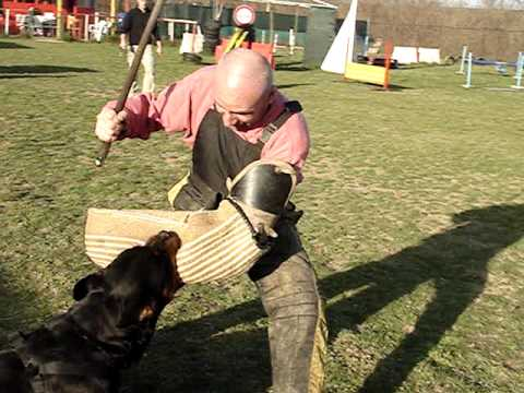 Rottweiler Attack Ipo Training Youtube