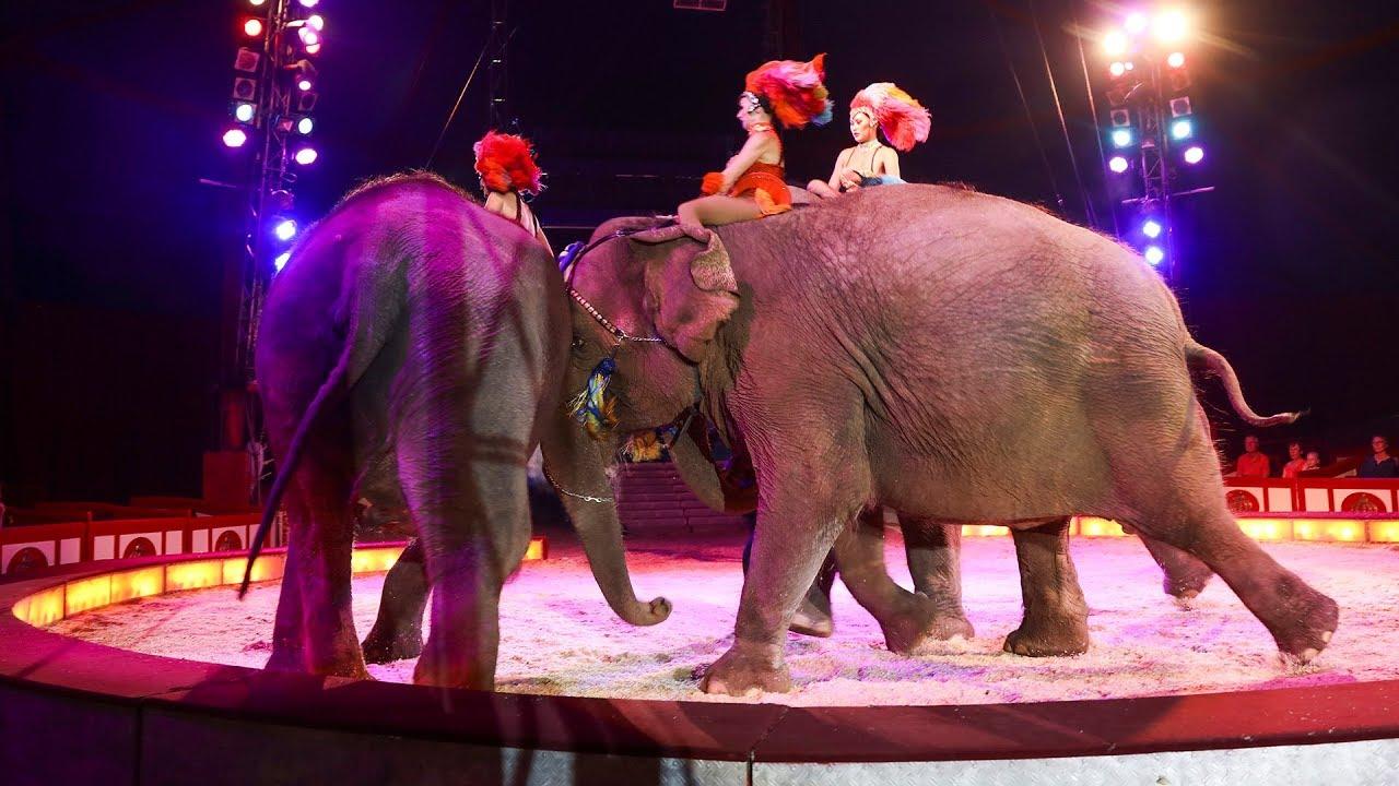 Zirkus Krone Elefant