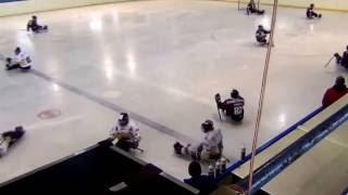 Sparta Praha sledge hokej vs Litvínov