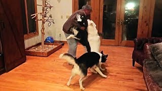 Dogs React to Grand Dad Coming Back from Vacation