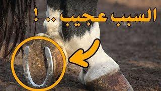لماذا ترتدي الخيول حدوة أسفل حوافرها .. ولماذا لا ترتديها باقى الحيوانات
