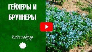 видео Брунера выращивание и уход фото