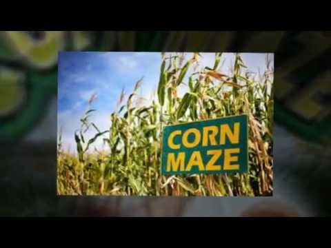 San Antonio Corn Maze - The Biggest & Newest in the area!