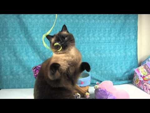 Bonus Simon Video Playtime With Simon the Siamese Cat Easter Basket Grass Shopkins Elsa Tokidoki