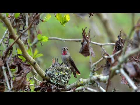 Hummingbirds & Owl at Beach Grove Park B C  Canada by TonyYu