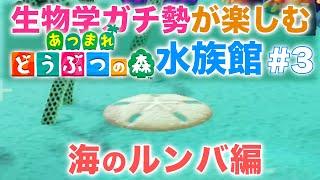 東大院・生物学ガチ勢による『あつ森水族館』の楽しみ方 #3 海のルンバ編