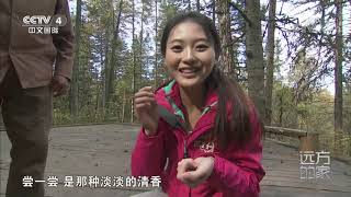 [远方的家]大好河山 探访红松原始林  CCTV中文国际