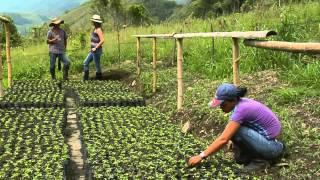 Producción de Maracuyá en Escuela de Campo thumbnail
