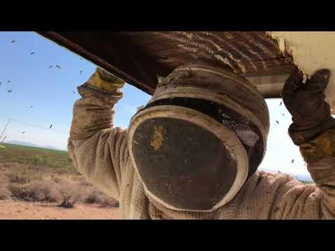 Toxic Bee Hive