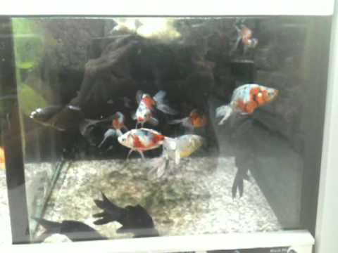 Fish abuse and neglect at walmart youtube for How much are betta fish at walmart
