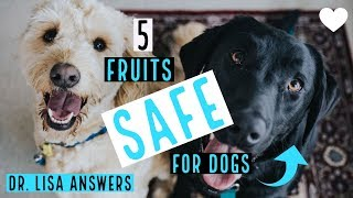 5 fruits SAFE for dogs | Veterinarian Dr. Lisa Answers