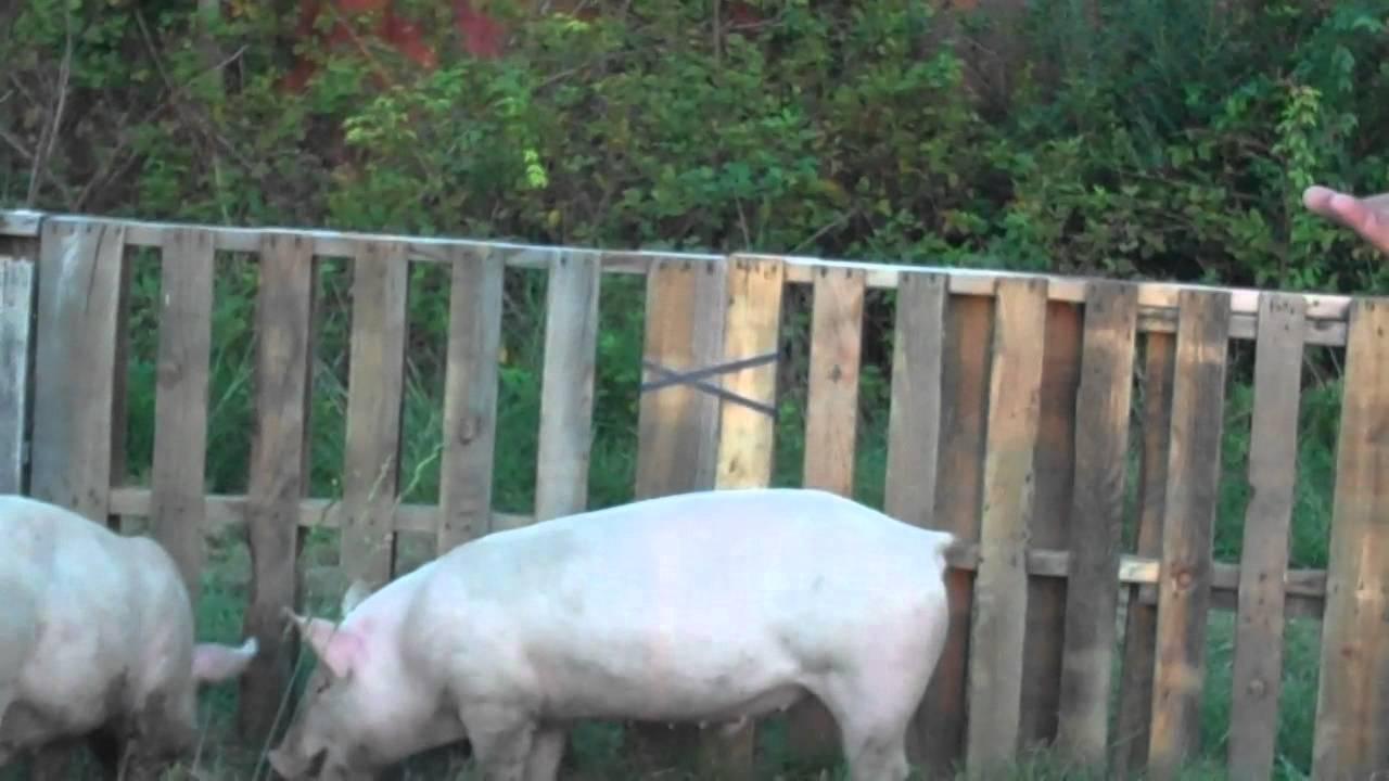 5 On The Farm Pig Pen Youtube