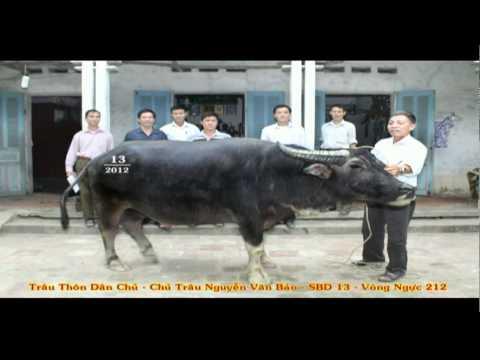 GIỚI THIỆU CHỌI TRÂU XÃ HẢI LỰU 2012.mp4