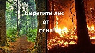 видео Берегите лес от огня
