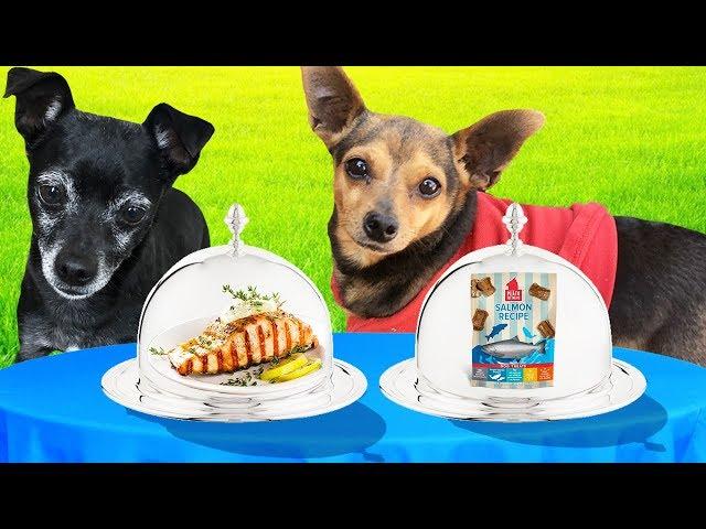 REAL FOOD VS. DOG FOOD CHALLENGE! (Pawzam Dogs)