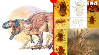 important-new-dinosaur-discovered-dinosaur-feathers-preserved-with-parasites-7-days-of-science